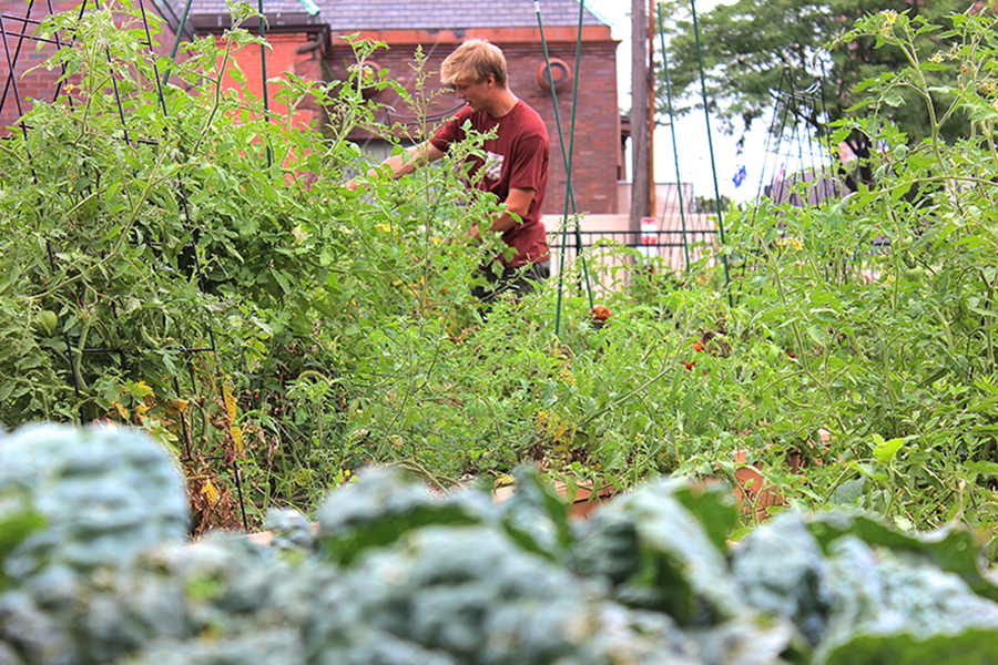 Student garden puts down roots at MCTC